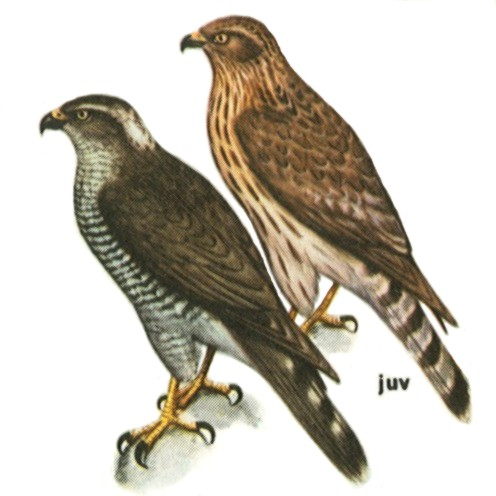 Особенности внутреннего строения птиц и органы чувств