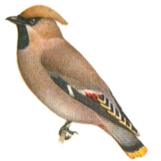 Фото синицы птицы